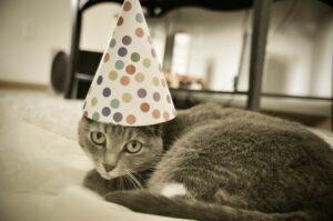 micio dolce party