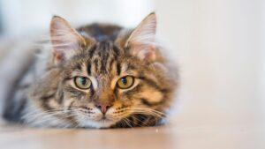 gatto micio spettacolare