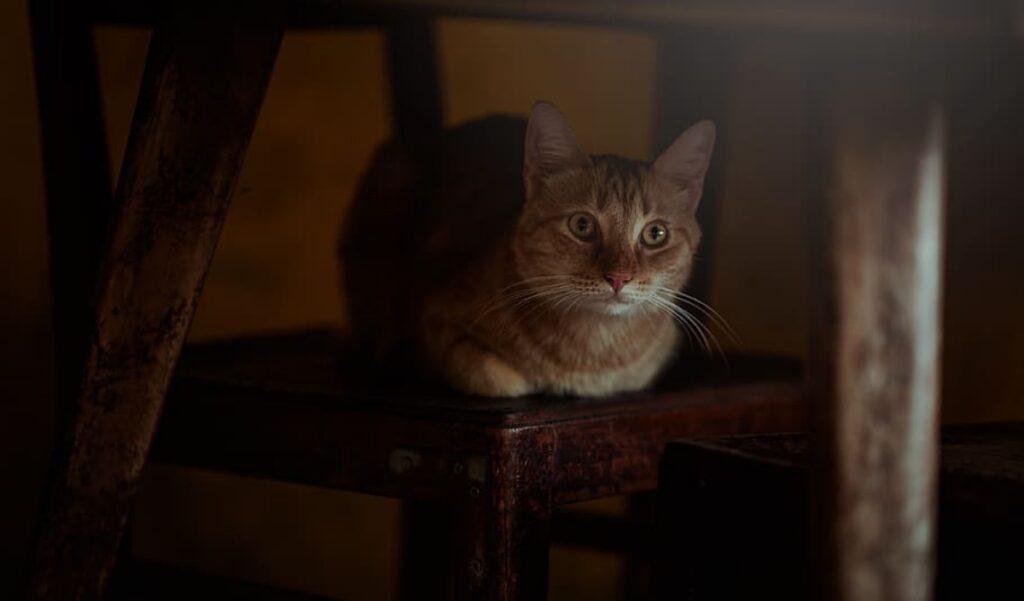 gatto seduto sedia