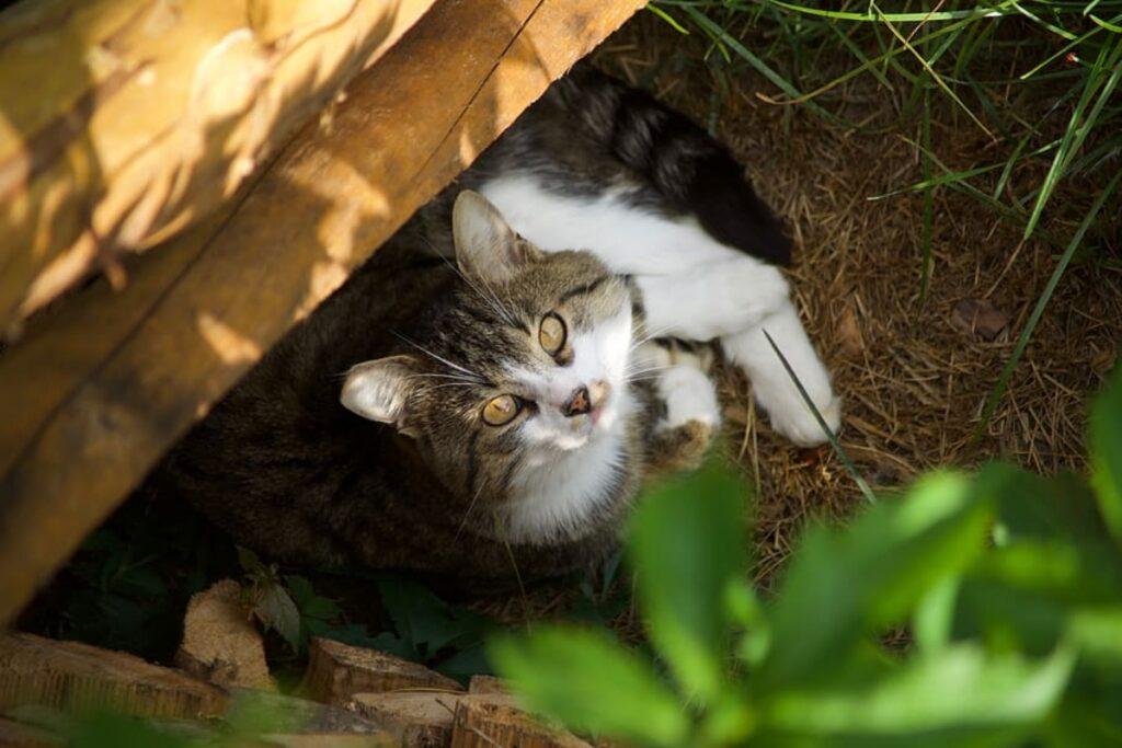 felino nel giardino