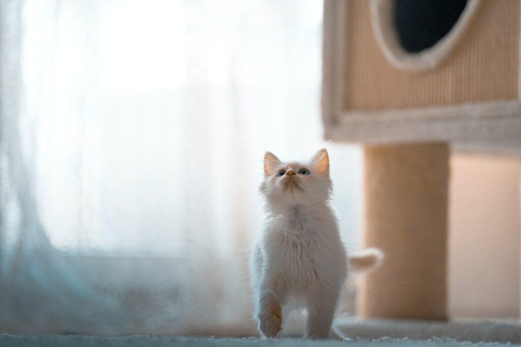 felino pronto saltare