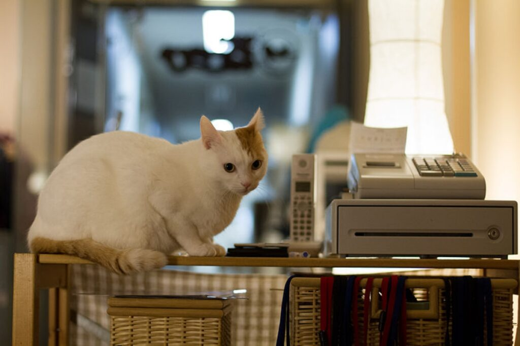 gatto vicino stampante