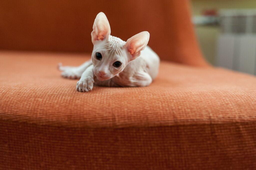 micio sul divano