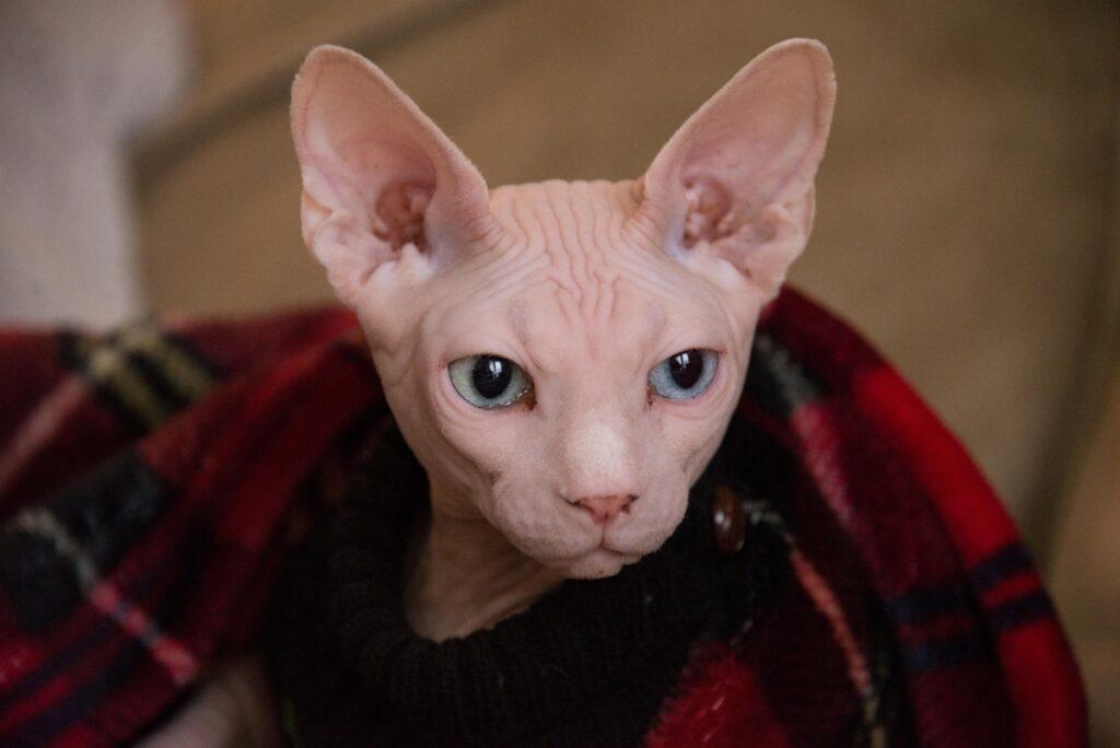 felino caldo coperta