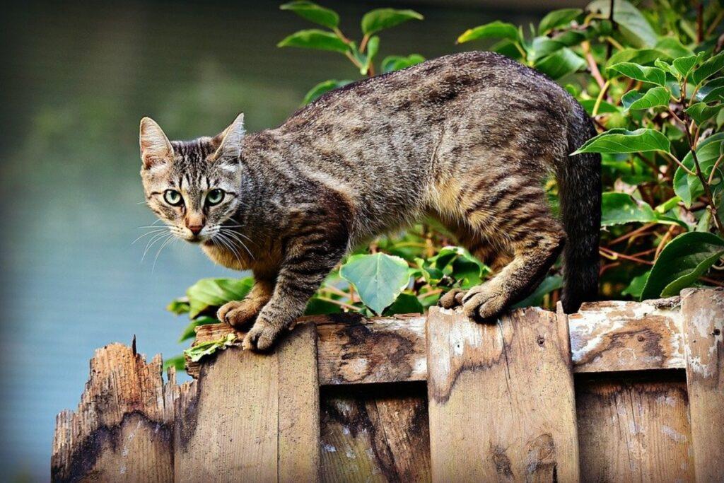 gatto esplora ambiente