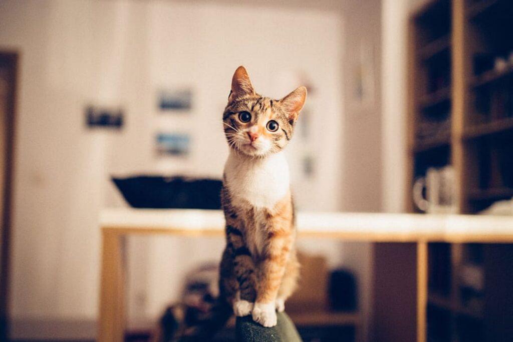 gattino a casa