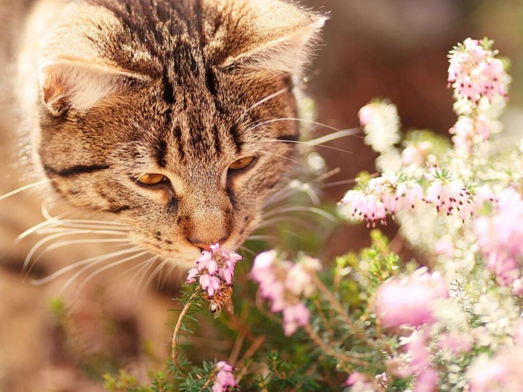 micio fiori odorare