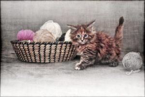 micio dolce cesta