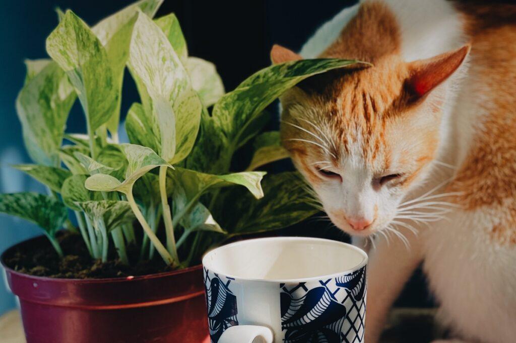 felino tazza porcellana