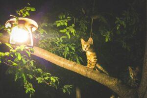 felino lampada luce