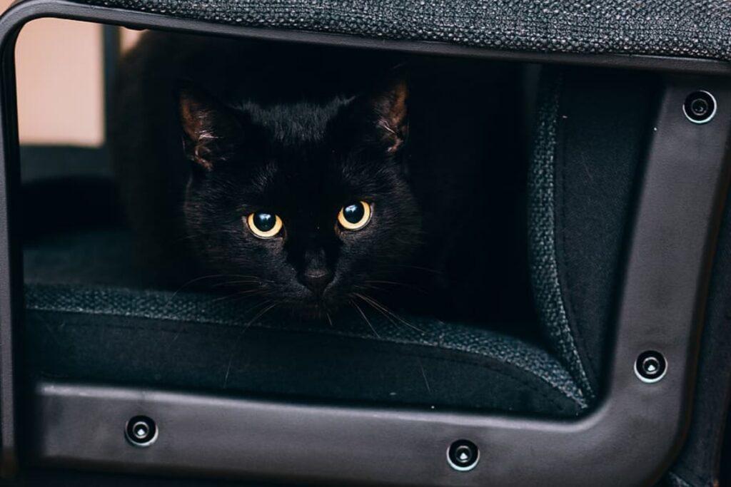 gatto nero trasportino