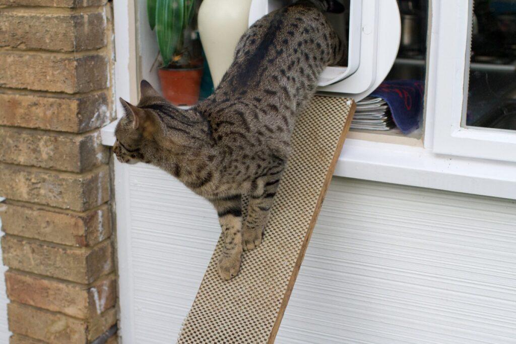 gatto usa rampa