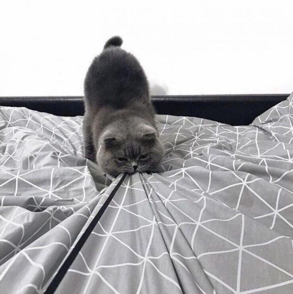 micio grigio lenzuola