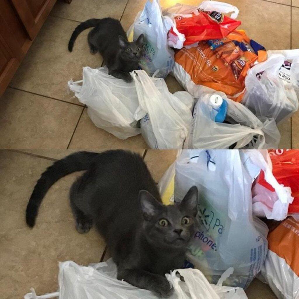 gatto espressione esilarante