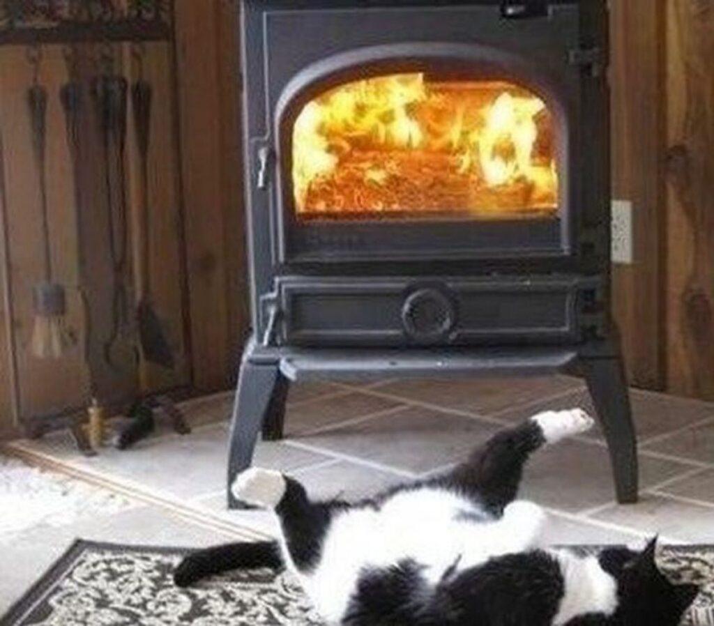 gatto stufa fuoco