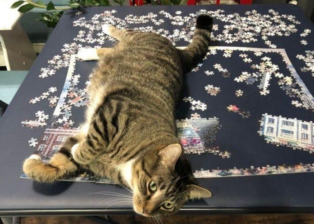 felino rovina puzzle