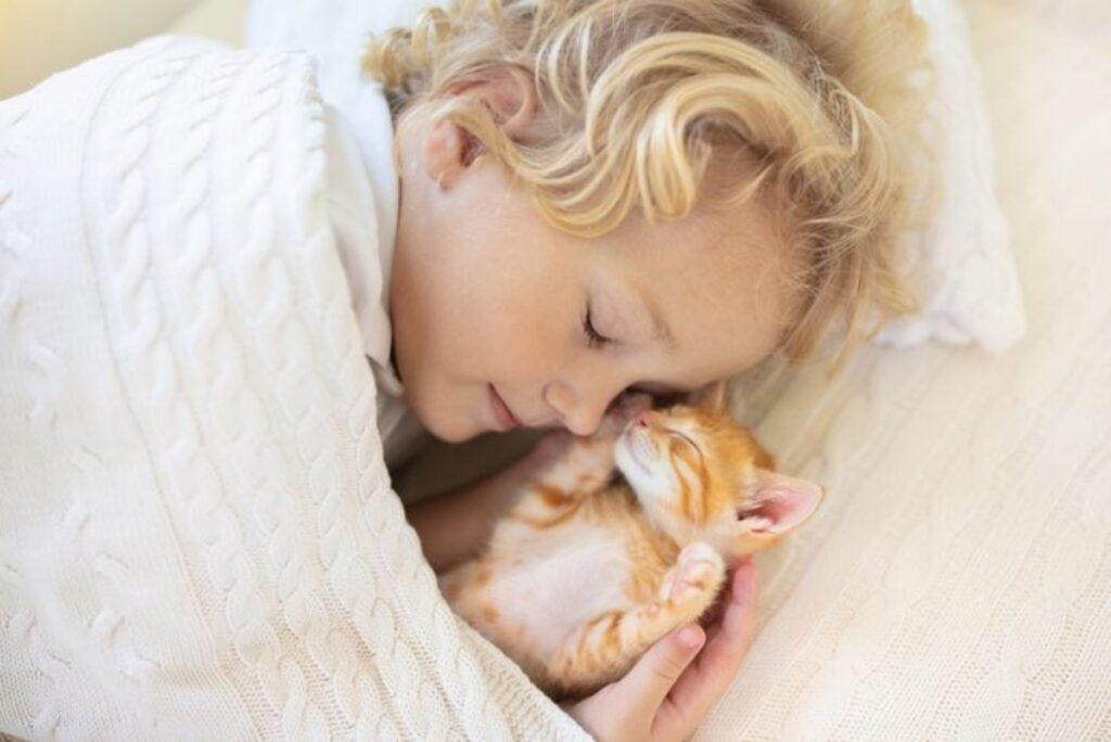 micetto arancione mamma