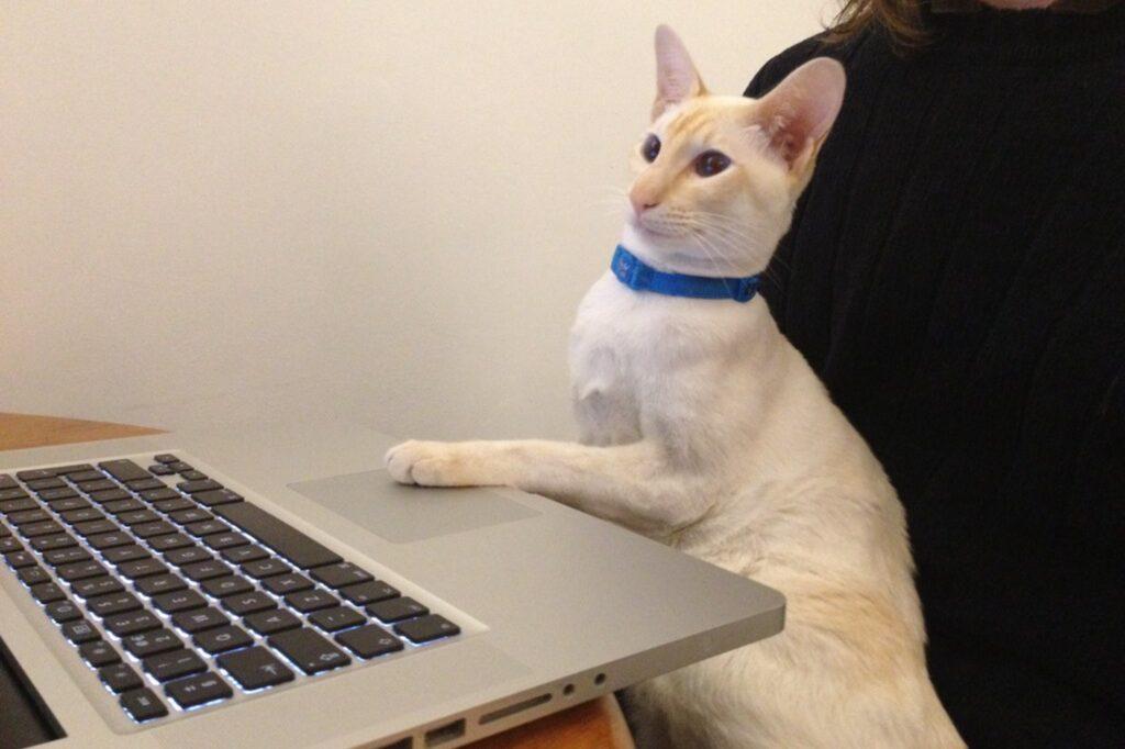 micio al computer