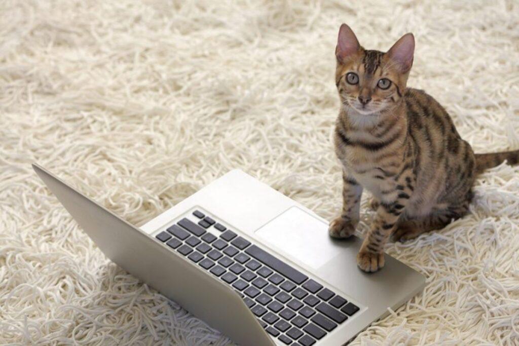 gatto davanti portatile
