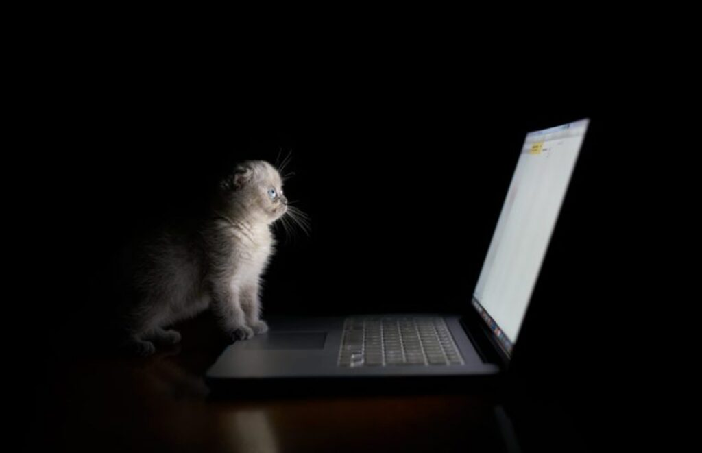 gattino occhi dolci