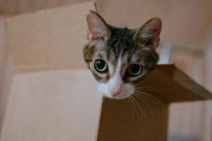 micio scatola dolce