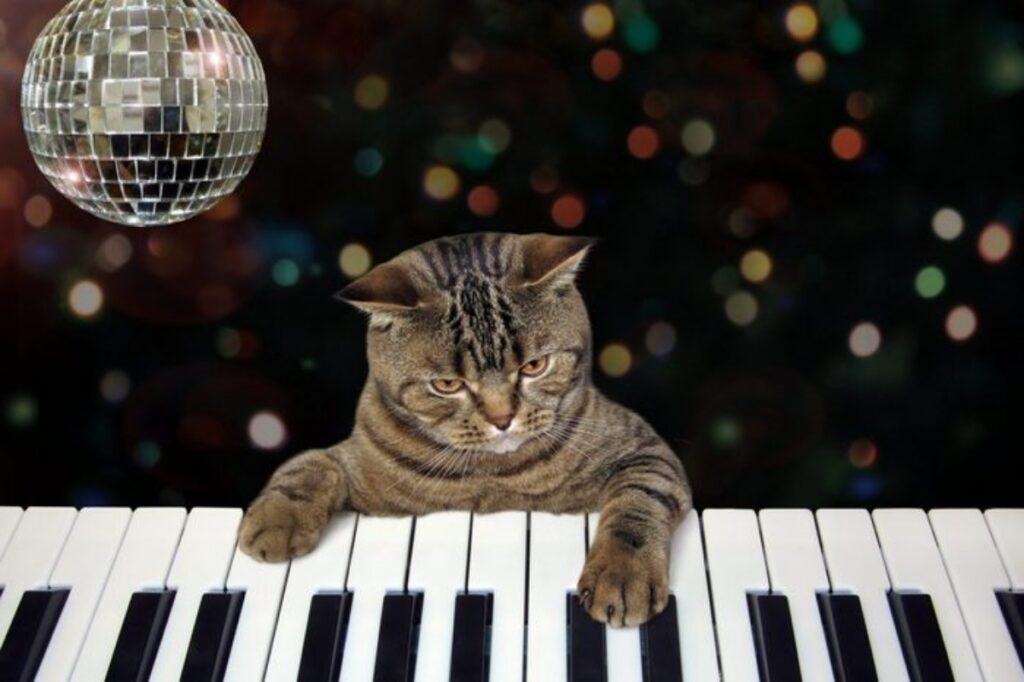 gatto party musica