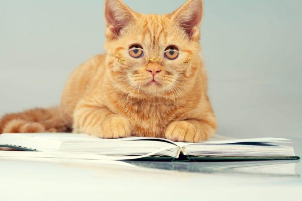 gatto porta occhiali