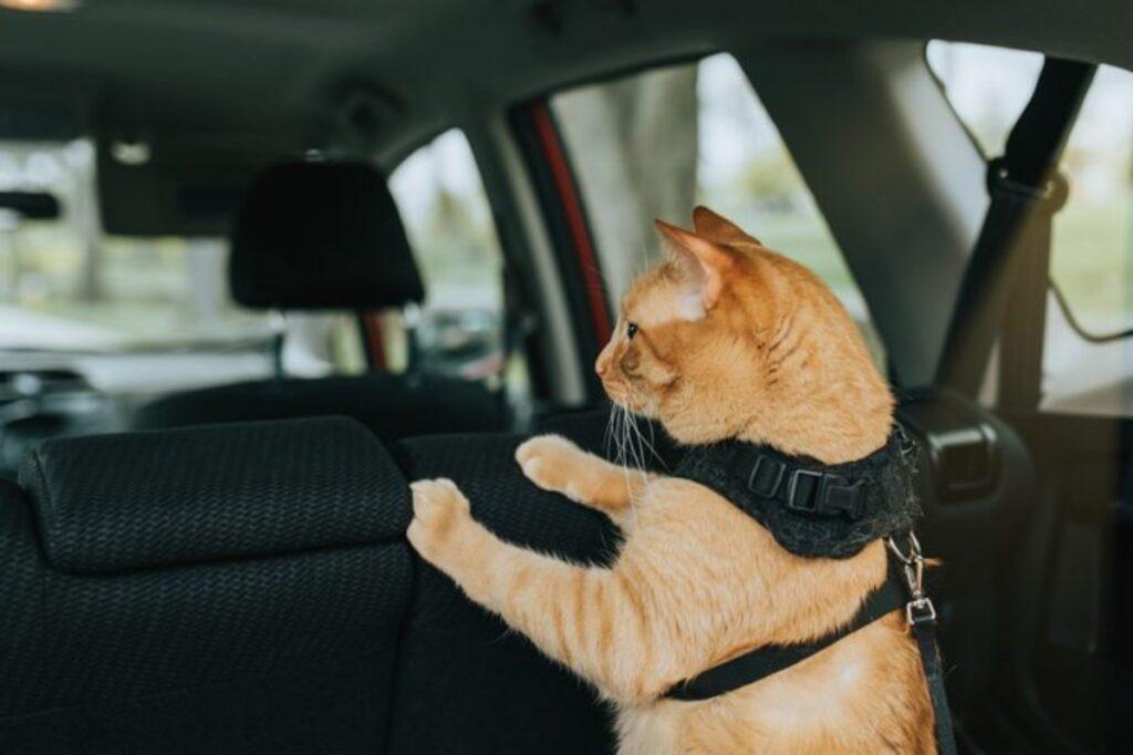 micio viaggio auto