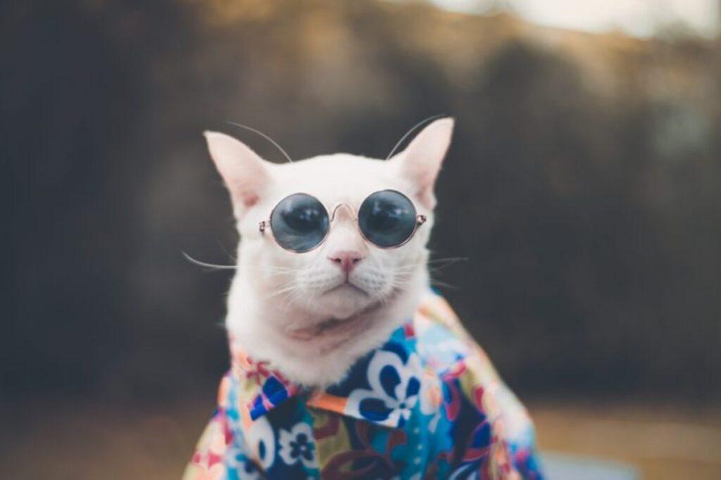 micio occhiali sole