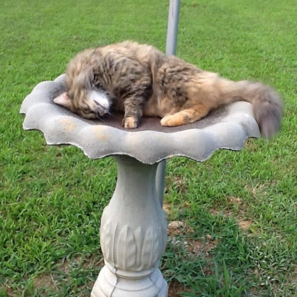 gatto fontana dorme