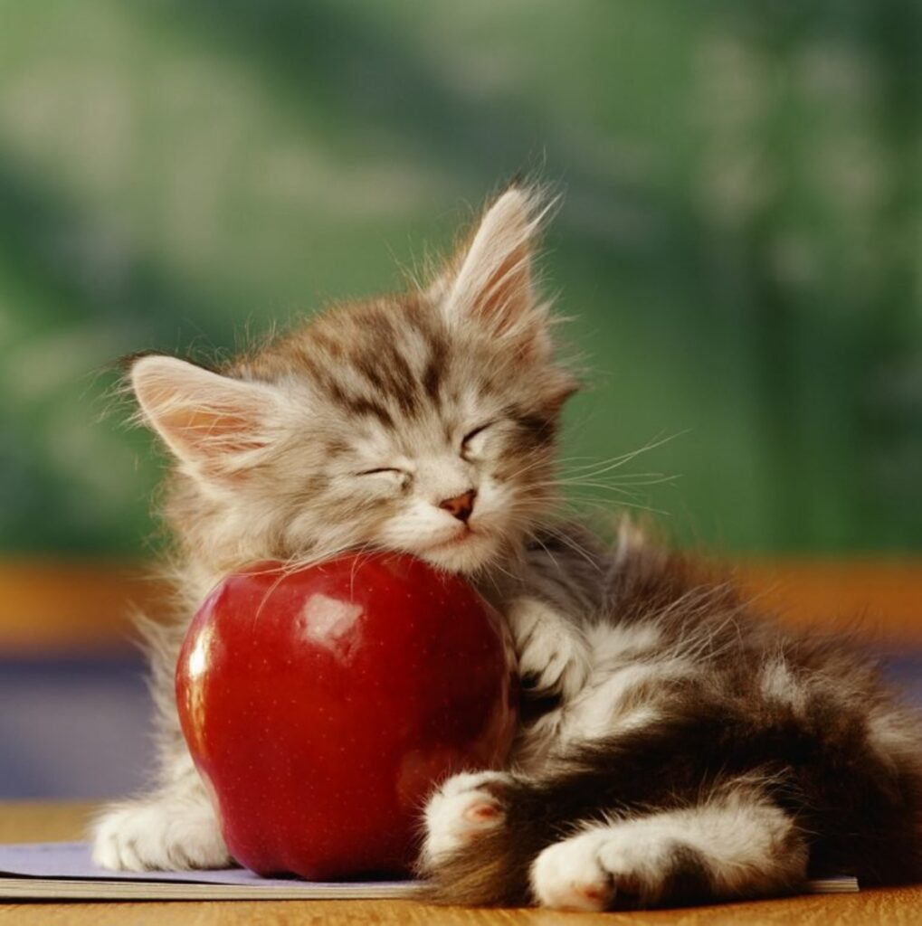 gattino mela abbraccia