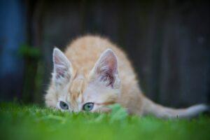micio erba nasconde