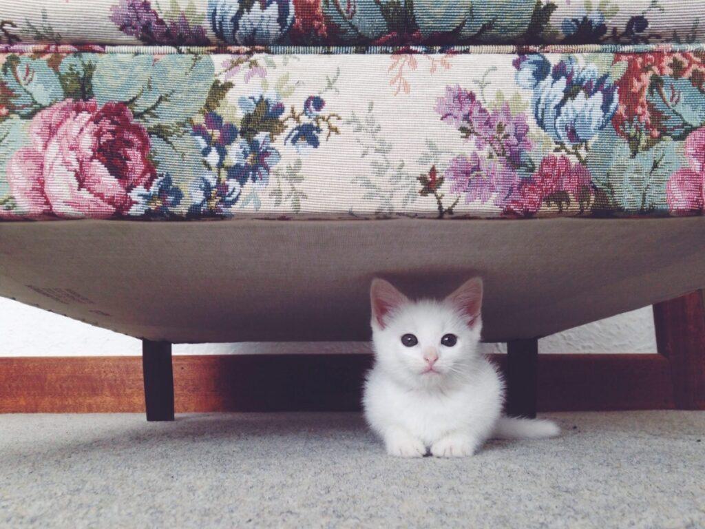 felino sotto letto