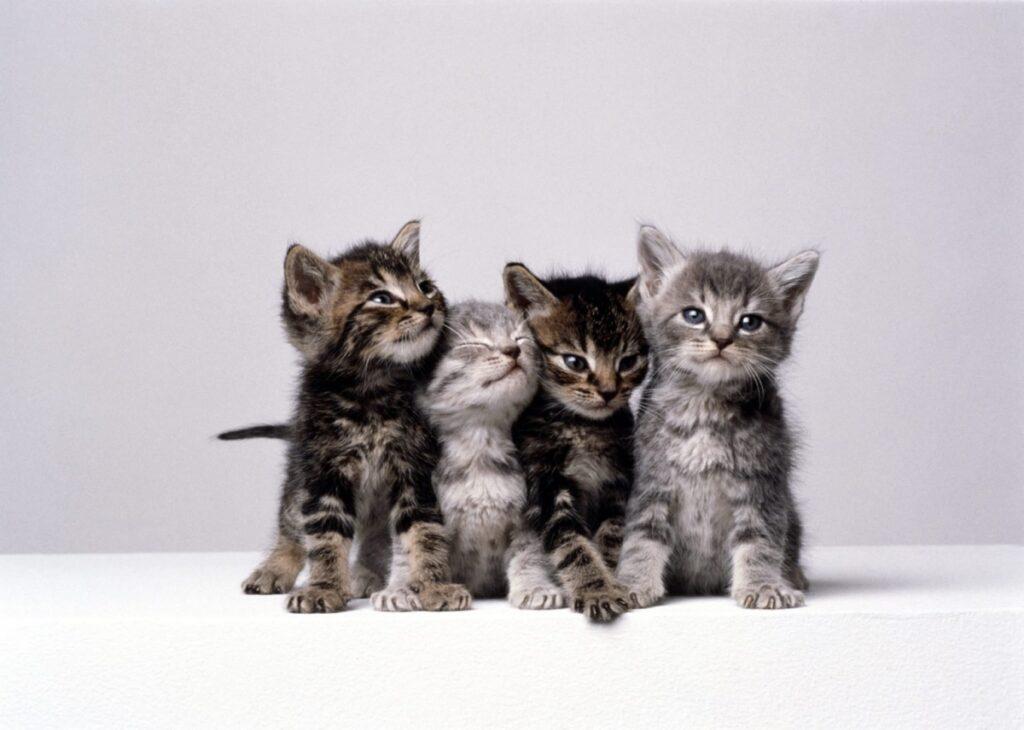 gatti dolcissimi unici