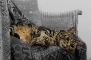 gatto soriano dolce