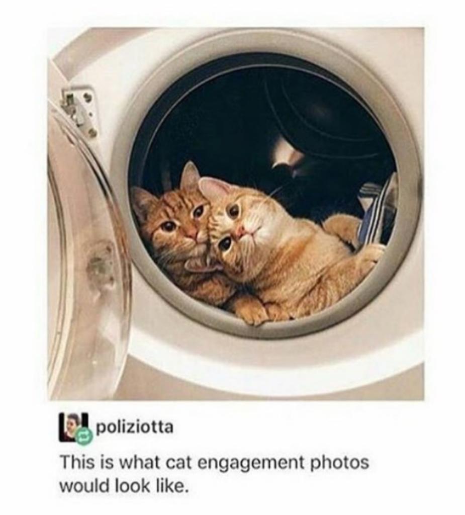 mici dentro lavatrice