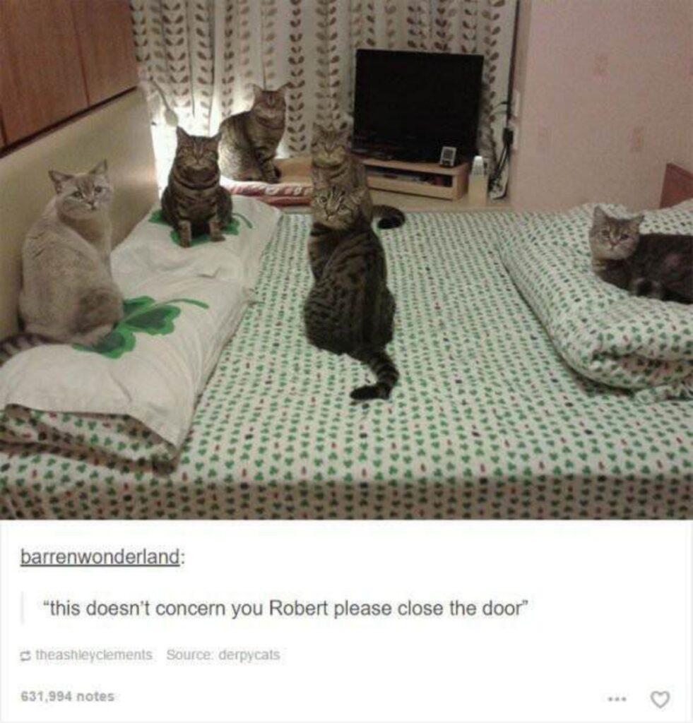 gatti letto occupano