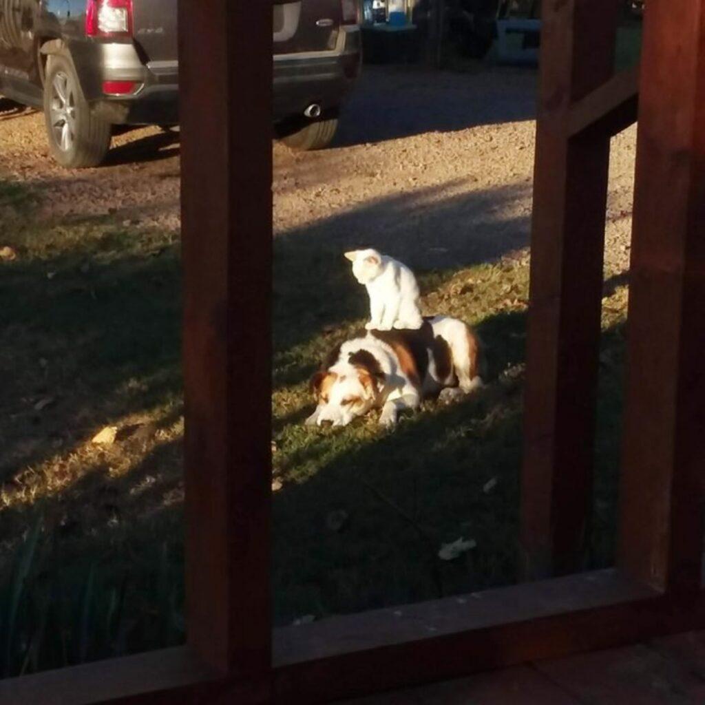 felino giardino cane