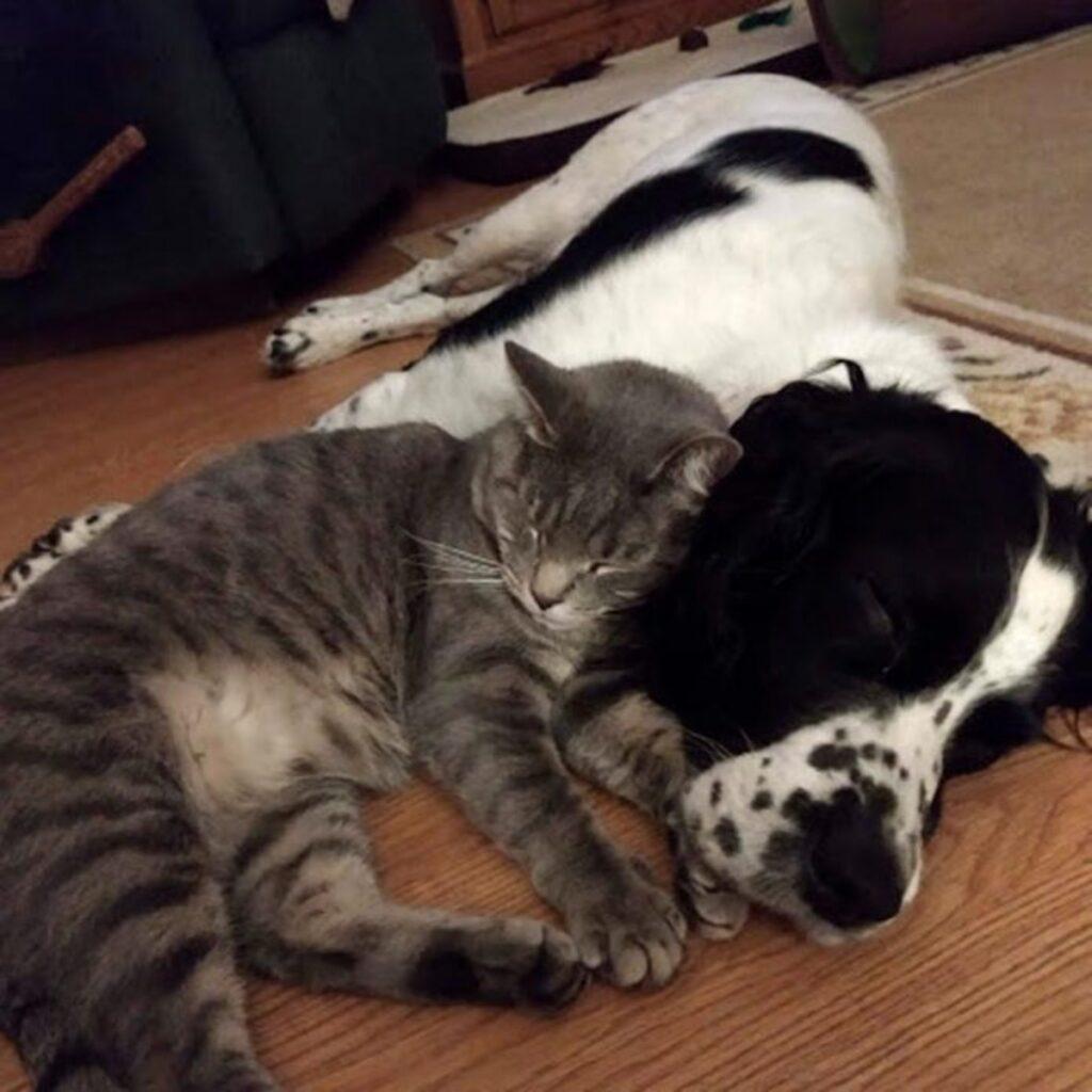micio sonno amico