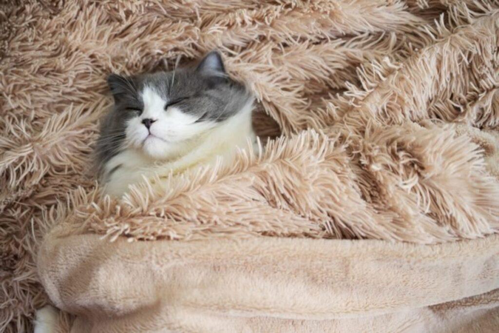 gatto coperta riposo