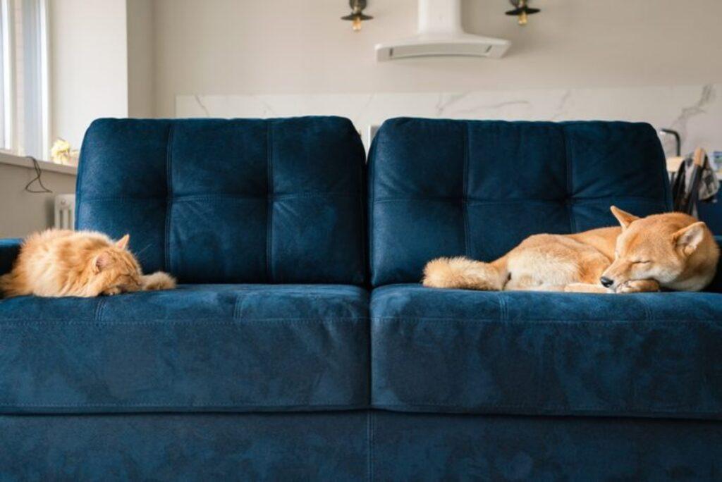cane gatto divano