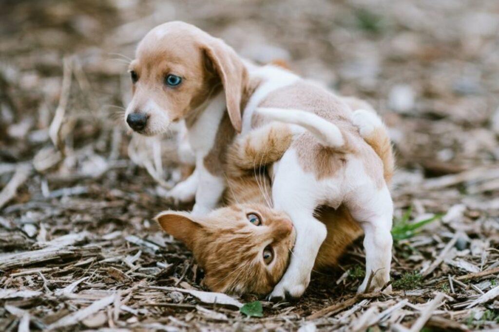 cucciolo con micio