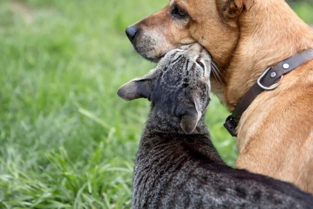 micio bacia cane