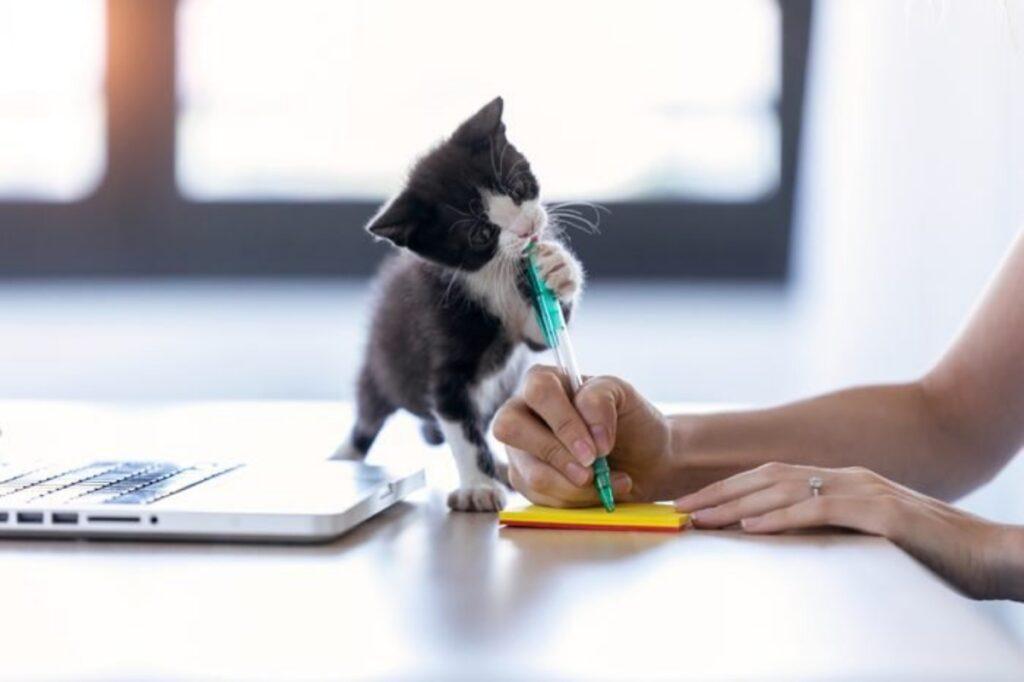 micetto penna gioca