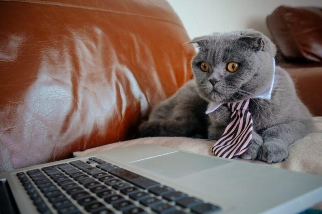 micio giacca cravatta