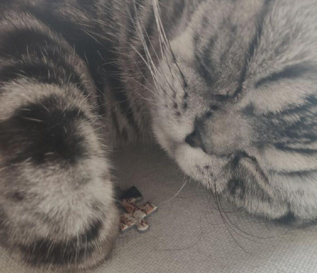 gatto tiene pezzo su zampa