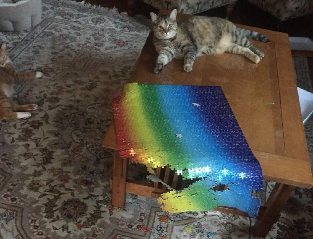 gatto con rompicapo arcobaleno