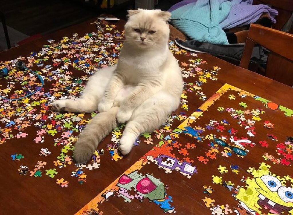 gatto seduto su pezzi