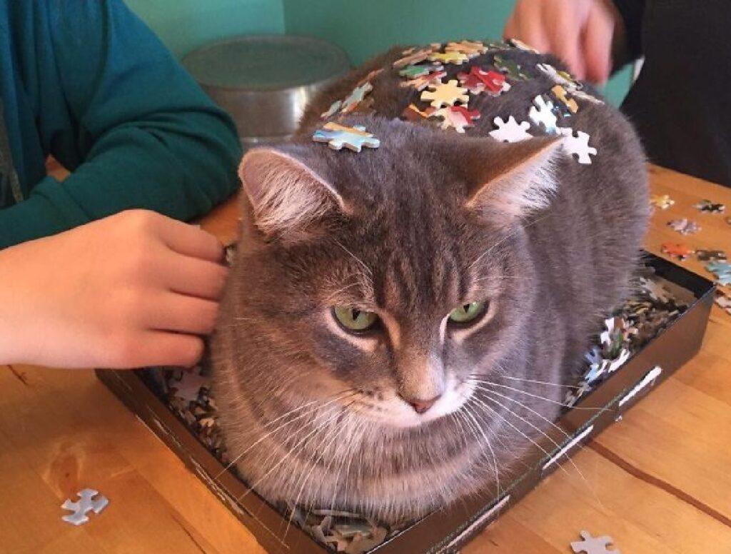 gatto con sopra pezzi di gioco
