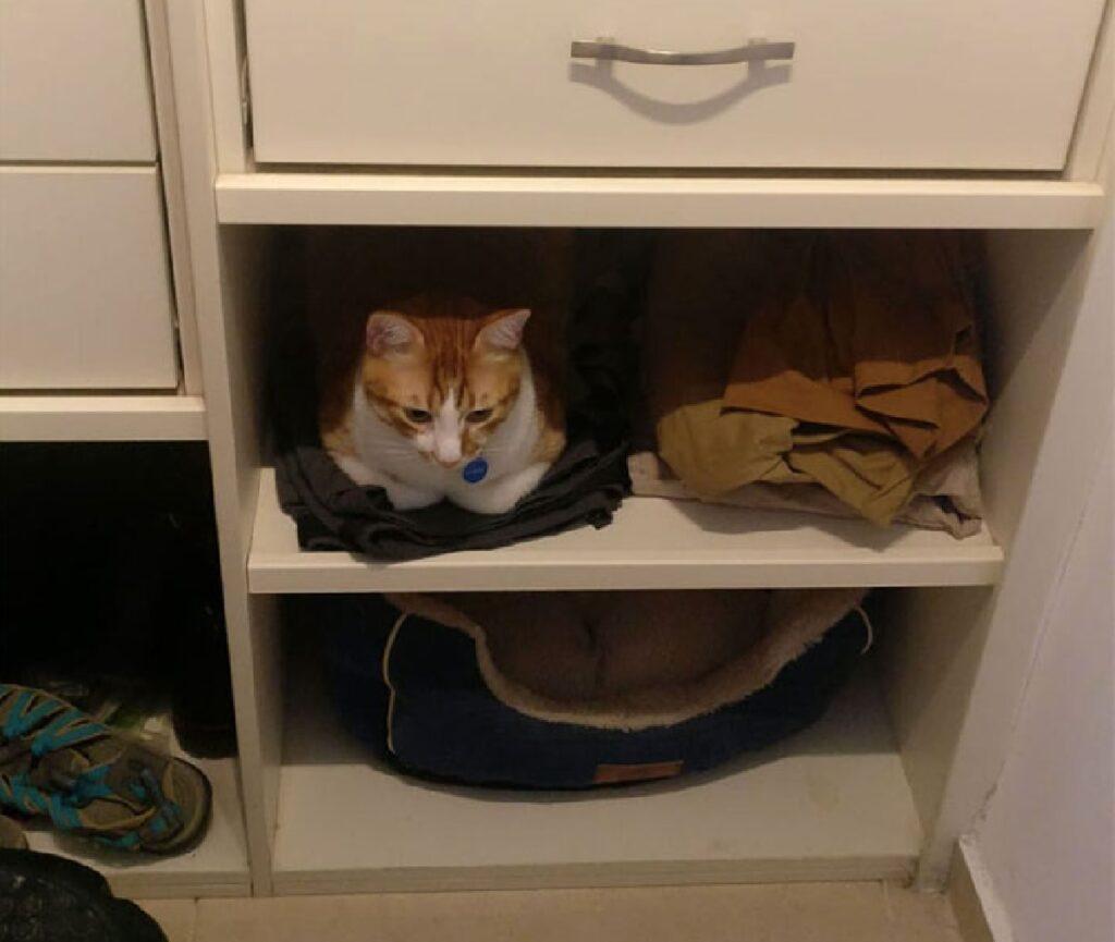 gatto dorme cuccia sotto scaffale